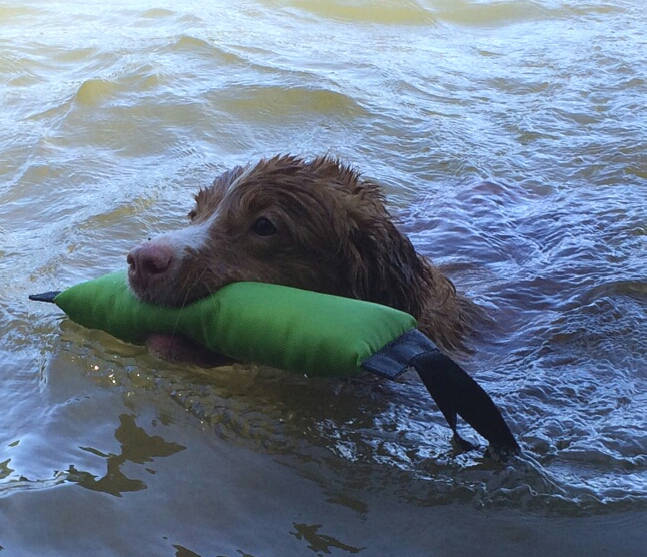 folly retrieving swimming