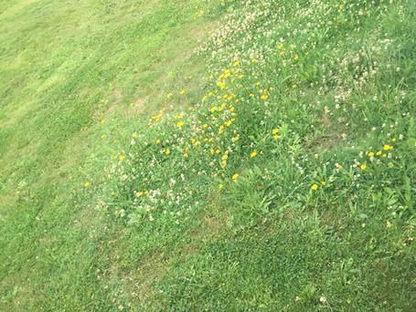 Minimaliseren in je tuin