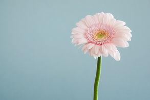 flowerwebsite.jpg