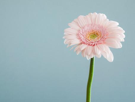 Hoe jij door minimalisme tot de essentie van jouw leven kan komen!