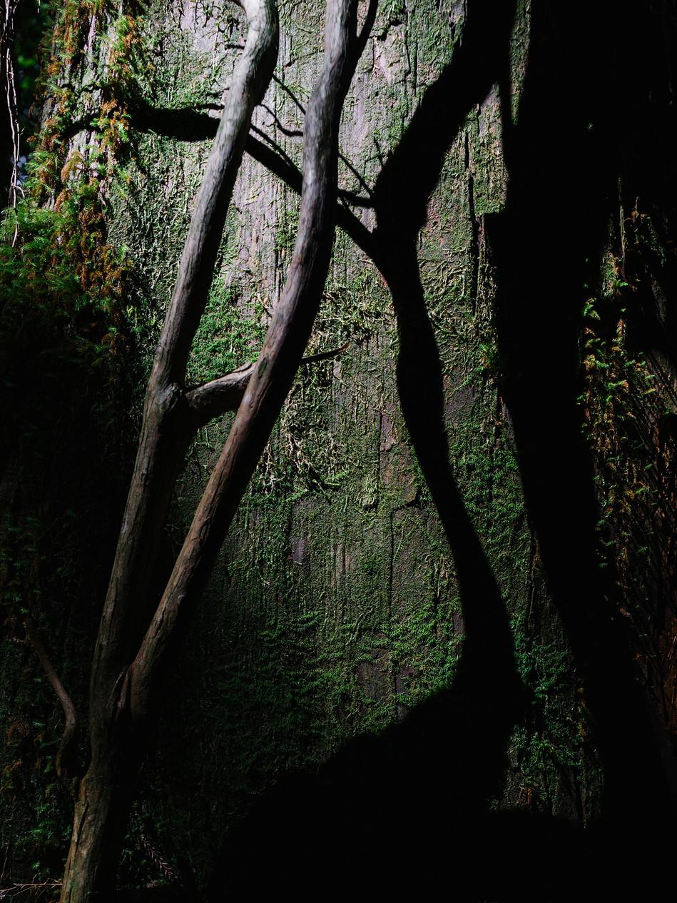 w2 Retorno - Yakusugi1.jpg