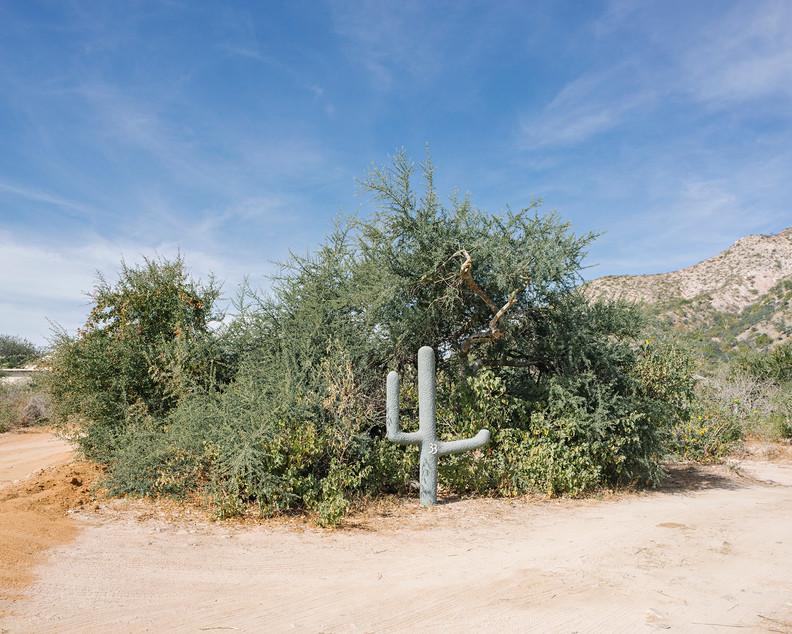 w Marcar - cactus.jpg