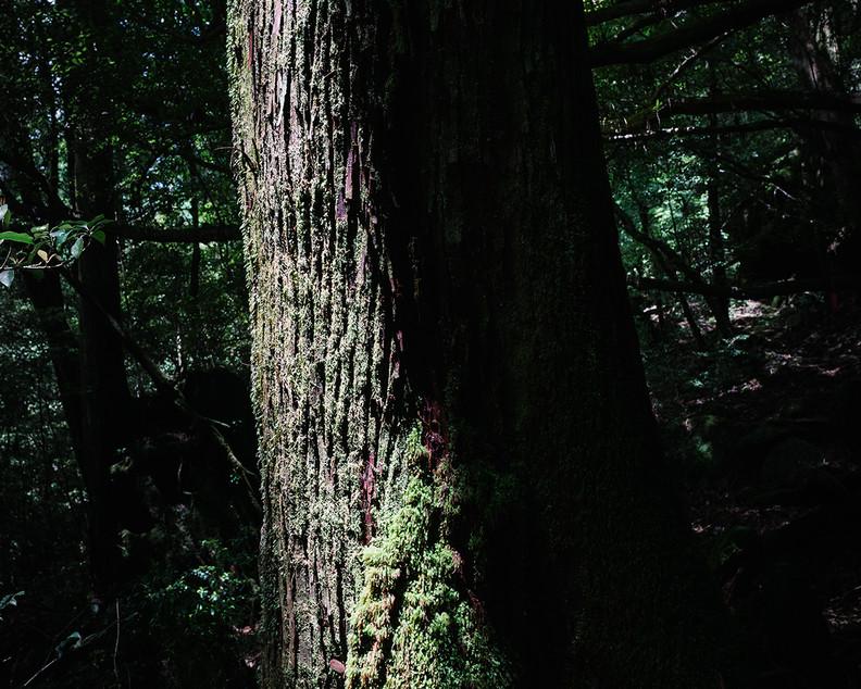 w Retorno - tree trunk3.jpg