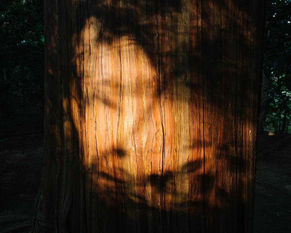 w Retorno - tree trunk.jpg