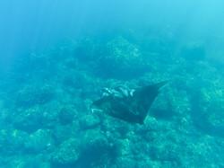 plonger au Cap-vert