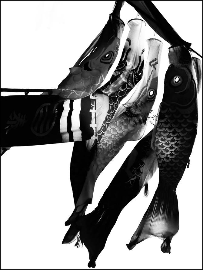 瀬戸内国際写真祭2016にて個展開催