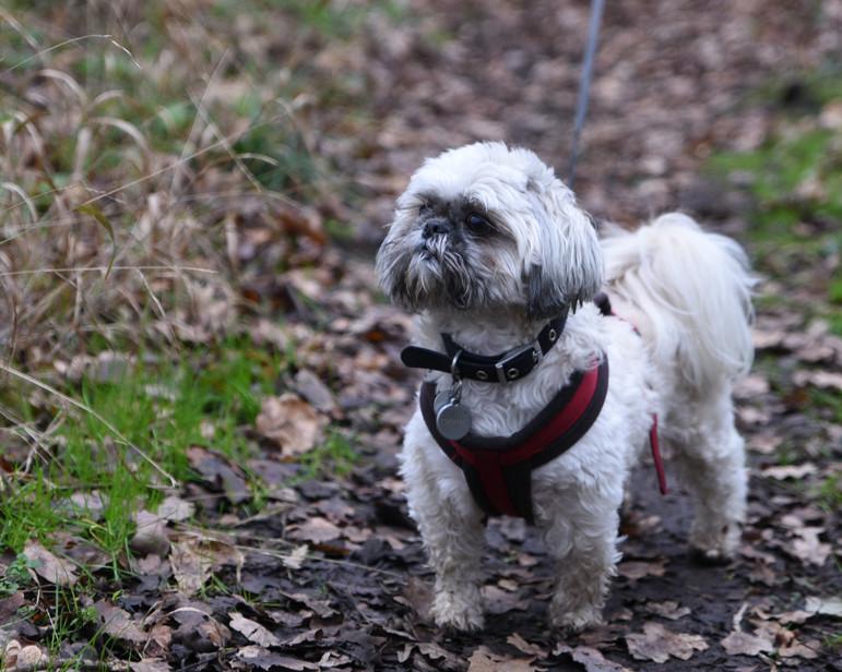 Dog pet adventure