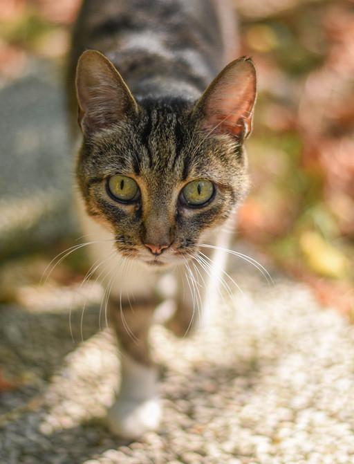 Cat pet adventure