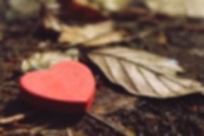 heart-1318850_1920.jpg