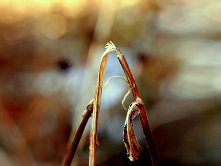 """The Bruised Reed: We don't need """"Wheat-Wackers"""""""