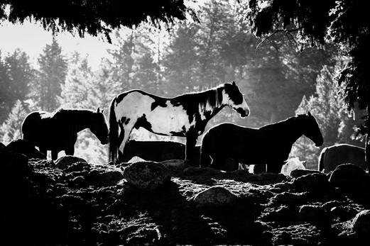 Wild Horses Montana.JPG