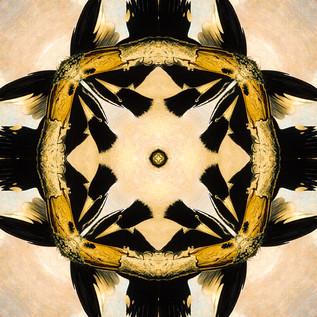 Woodpeckers Kaleidoscope 21.JPG