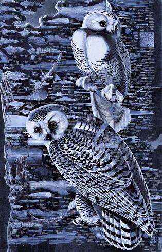 Night OWL 003 copy.JPG