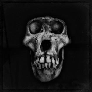 99%  Type G _AIR0689_Bones.JPG
