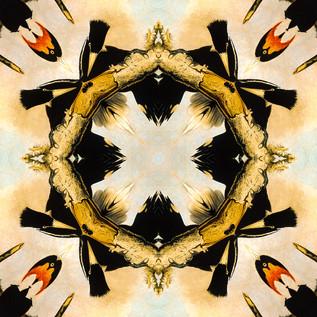 Woodpeckers Kaleidoscope 16.JPG