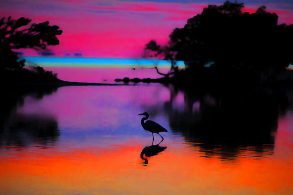 Flamingo Point , Everglades