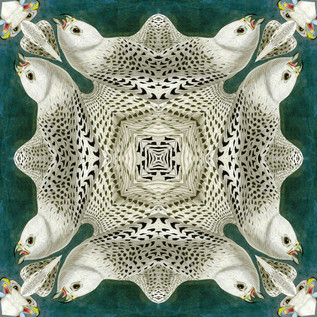 Falco_rusticolusAWP366AAA Kaleidoscope 2