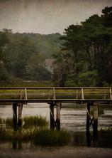 Marsh Path_-1.jpg