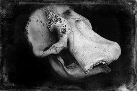 Oliphant Wet Plate-2.JPG