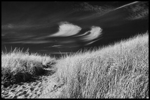 Dune Stroke CapeCod0178.JPG