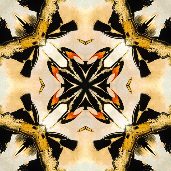 Woodpeckers Kaleidoscope 18.JPG