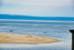 Happy Hunting Grounds Yakfish-1.jpg