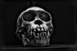 99% TYPE C_AIR0654_Bones.JPG