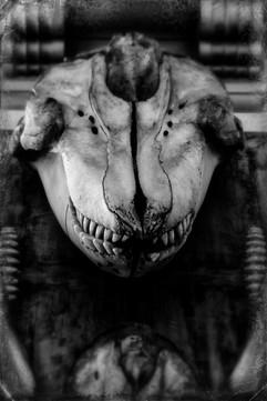 Seal Skull  Bones _AIR0594_Bones copy.JP