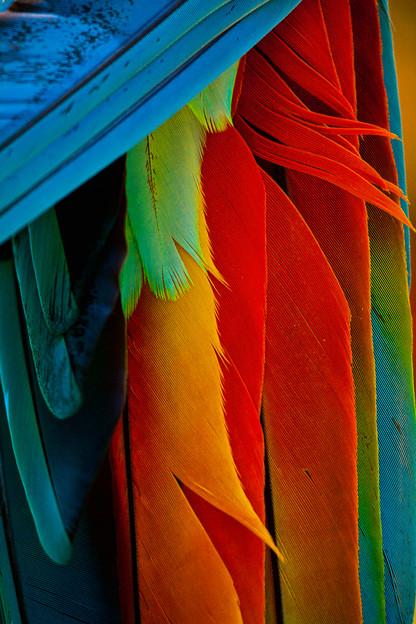 Wild Birds Macow Mountain, Copan Hondurus