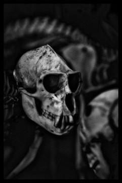 _AIR0743_Bones.JPG