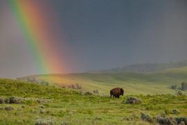 Yellowstone1670-Edit.JPG