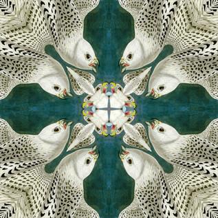 Falco_rusticolusAWP366AAA Kaleidoscope 1