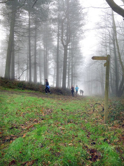 Walking and Running Trails