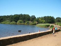 Frensham Little Ponds