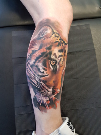 Colourful Tiger tattoo on the Calf