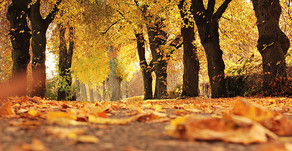 Fall Into Autumnal Marketing Initiatives