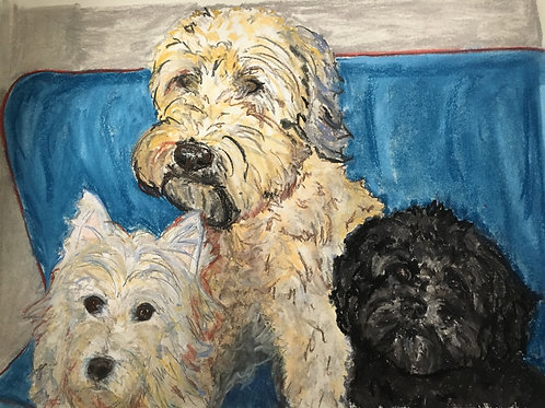 "12"" x 16"" 2-3 pets. Comes m&f. Email me 2-3 photos, name,age,breed,personality."