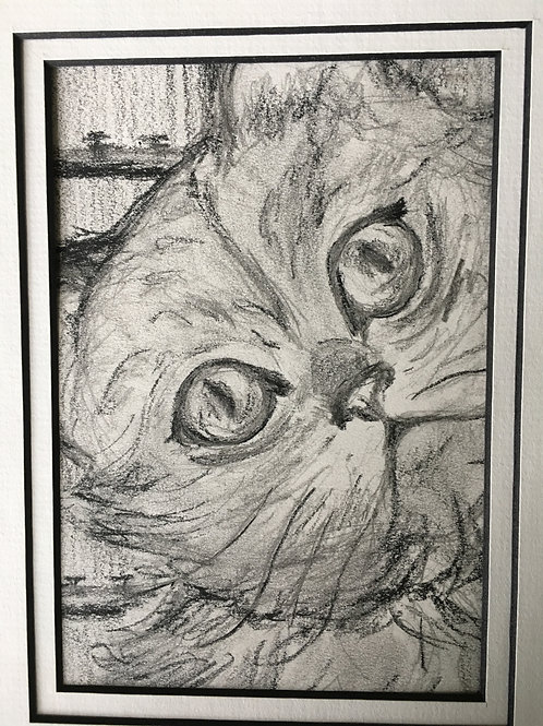 "5"" x 7"" Charcoal comes m&f. Email me 2-3 photos, name,age,breed,personality."
