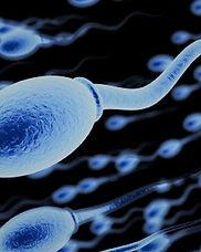 spermler5.jpg