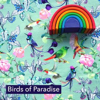 Birds of paradise.jpg