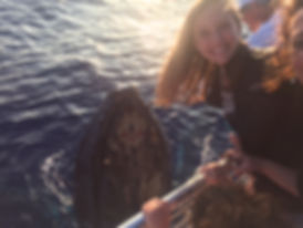 whale 7.JPG