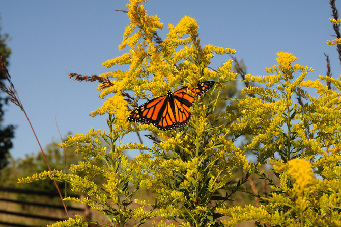 Butterflies, Hummingbirds and Bees, Oh My!
