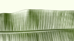 feuille - Glace pilée - photographie argentique