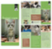 bebhs-cat-brochure-kiera-lofgreen.jpg