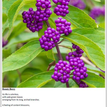 Beauty Berry by Jordan B.