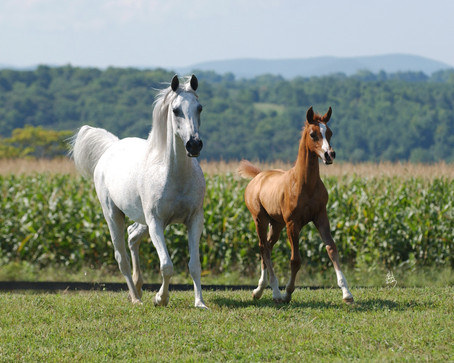 4 Tips for Easy Foal Registration