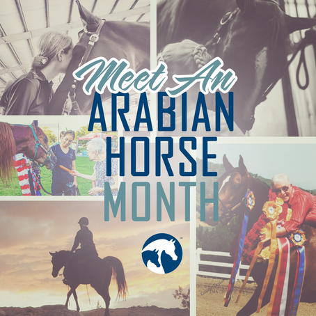 May is Meet an Arabian Horse Month!