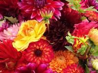 Des fleurs colorées / Coloured Flowers