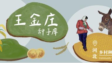 乡村种子库 | 小小王金庄,地种百样不靠天