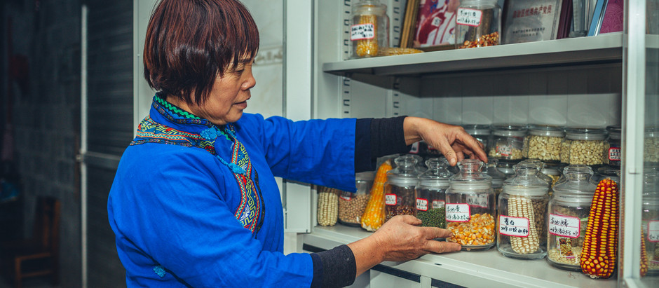 From eyebrow beans to 'lost' rice: community seedbanks are protecting China's crops